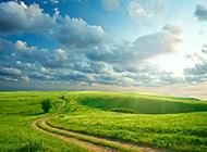 阳光下的绿色田野风景图片