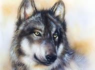 宗师级画家手绘动物图片