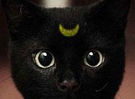 搞笑动物图片之代表月亮消灭你们
