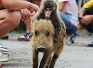 动物搞笑图片之师傅有难了