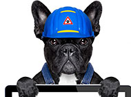 穿职业装的小狗狗创意图片