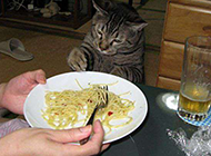 二货猫搞笑图片之没胃口