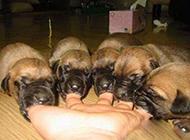 邪恶爆笑囧图之小狗们饿了