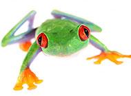 彩色青蛙高清图片素材