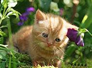 伤心忧郁的小猫动物图片