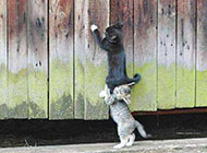 可爱搞笑的小猫咪图片