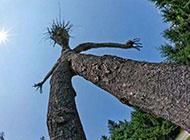 囧图搞笑图片之树精