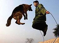和狗狗一起跳绳qq搞笑图片