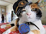 史上最洋气的猫可爱搞怪图片