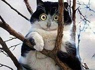 搞怪动物图片之山寨猫头鹰