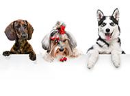 可爱搞笑的狗狗高清图片