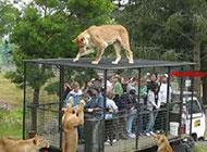 超霸气的动物图片