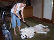 爆笑狗狗趣图之按摩身体