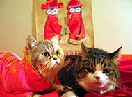 爆笑猫咪图之洞房花烛夜