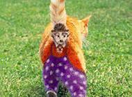 可爱的猫咪搞笑二货图片