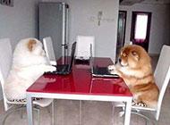 会玩电脑的狗狗qq爆笑图片