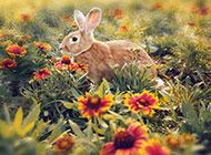 可爱乖巧的小兔子桌面壁纸