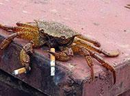 有故事的螃蟹超级爆笑图片