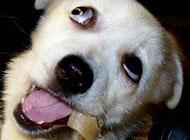 吃骨头的狗狗搞笑表情图片