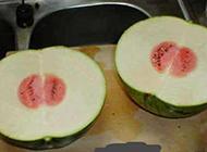 内涵爆笑囧图之出轨的西瓜