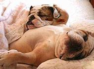 狗狗的床照内涵爆笑图