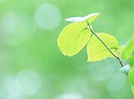 绿色叶子清新淡雅背景图片