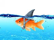 水中的小金鱼图片素材