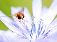 常见的昆虫动物苍蝇图片