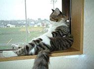 最可爱搞笑的猫咪图片