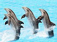 可爱有灵气的海豚高清图片