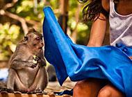 动物搞笑图片之连你也学坏了