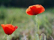 精美迷人的鲜花壁纸图片