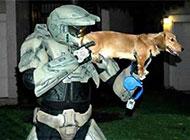 网络最新恶搞狗的图片