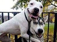 笑一个二货狗狗图片