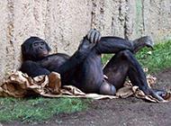 爆笑动物图片之躺姿