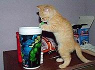 偷吃的小猫可爱动物图片
