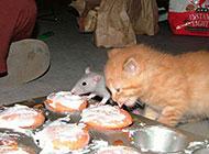 两只小吃货超级爆笑图片
