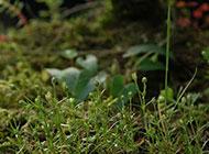 春天的小草摄影图片