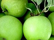 清脆可口的青苹果高清图片