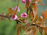 乡间野花盛放摄影图片