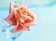 唯美的粉色玫瑰花艺图片欣赏