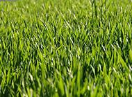绿茵茵的草地高清图片欣赏