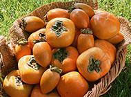 鲜甜可口的柿子高清图片