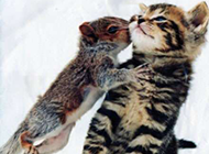 可爱的奇葩动物照片走红
