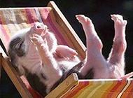 小猪的幸福生活爆笑动物图片