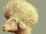 2016最给力发型搞笑动物图片