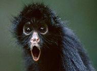 最新的动物搞怪表情图片