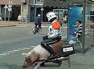 荒野大镖客搞笑坐骑图片