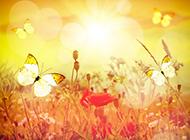 花朵与蝴蝶唯美景色图片