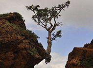 搞笑雷人图片之坚强的树